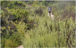 Antimicrobial Running Trail - Copy
