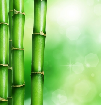 Bamboo Shirt  - Facts About Bamboo